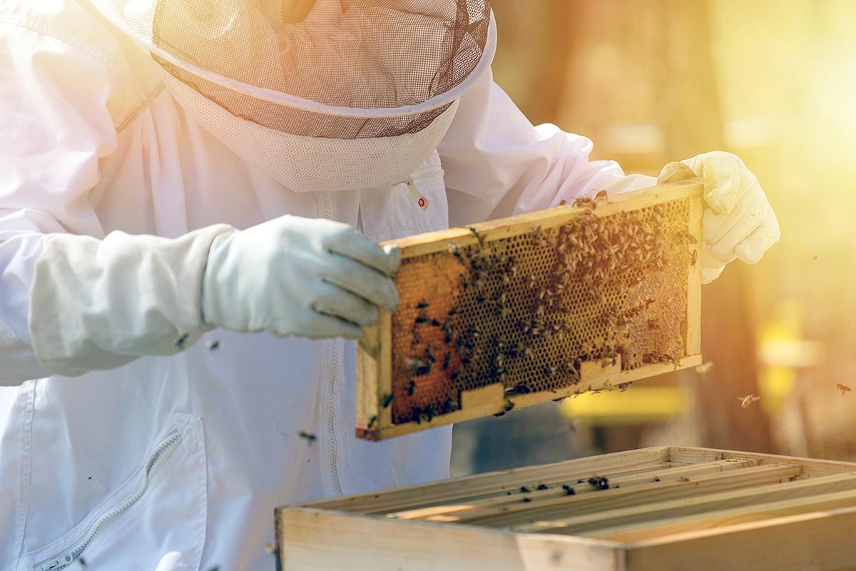 Pappa reale e propoli, i regali delle api