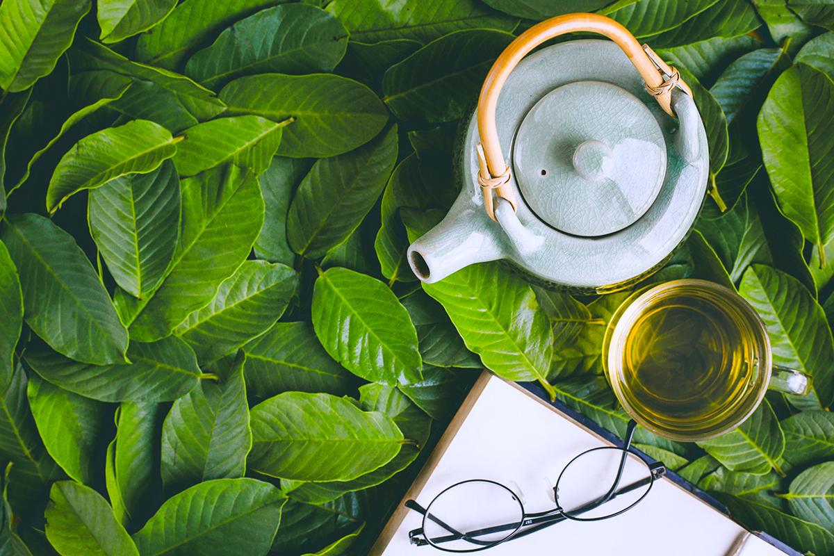 L-teanina per il relax e l'umore